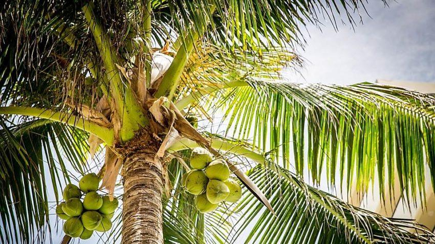 marketologi postoyanno padayut s palmy